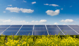 Research shines a light on perovskite solar cell performance
