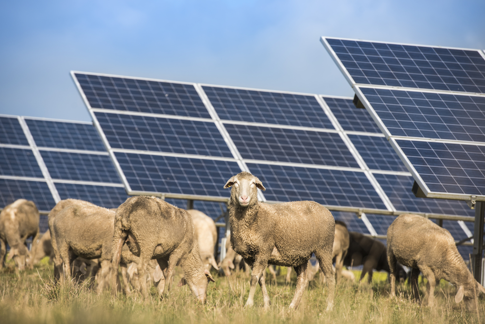 Renewable energy projects provide green shoots for Gippsland