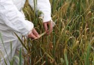 Study on infrared light paves way to improved crop protection